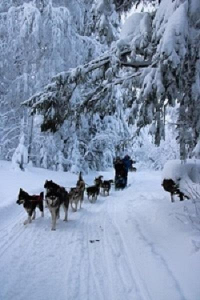 Dog sledding tours through Northern Russia