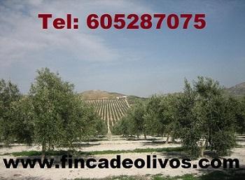 Fincas de olivar