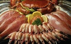 Nuestro biofiltro alarga la vida útil de pescados y mariscos, eliminando bacterias y volátiles orgánicos que contaminan las cámaras de conservación.