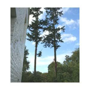 Abes taille d'arbres
