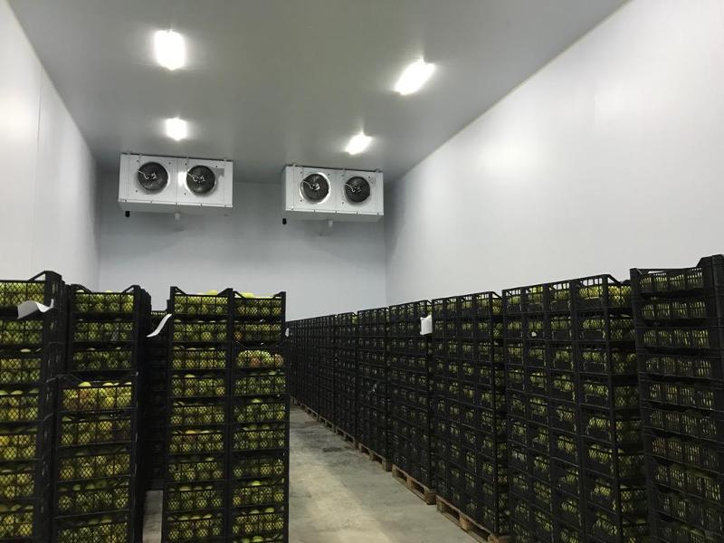 Cold room for fruit storage