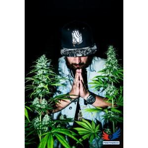Semillas de marihuana one love haze