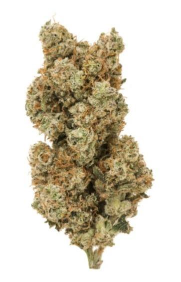 White Widow CBD Bud