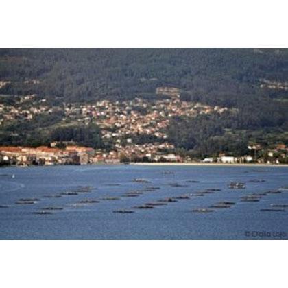 Conservas de pescado, marisco y caracoles