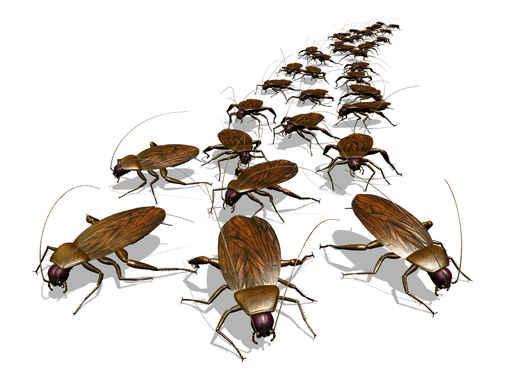 Empresa de control de plagas en Bilbao y poblaciones de Bizkaia. Desinsectación: fumigar cucarachas y todo tipo de insectos Desratización: eliminar ratas y ratones Desinfección: prevención Legionella