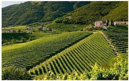 i più noti vini della zona Piave DOC e, gli ormai famosi in tutto il mondo, Prosecco Doc e Conegliano - Valdobbiadene DOCG.