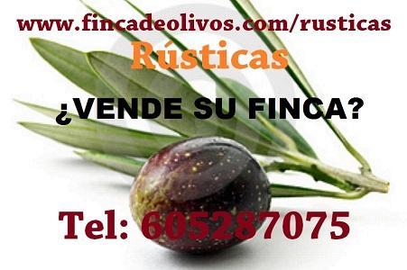 Fincas de olivas