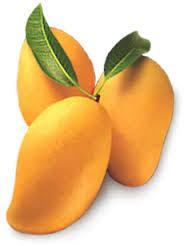 Pakistani mango season will start after 11 may 2014.if you have any demand please contact me.