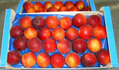Fresh NECTARINES of high quality and excellent taste..