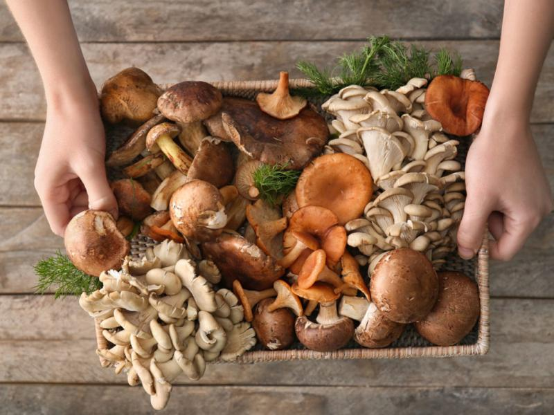 Cesto funghi freschi  ORTOFRUTTICOLA ARETINA