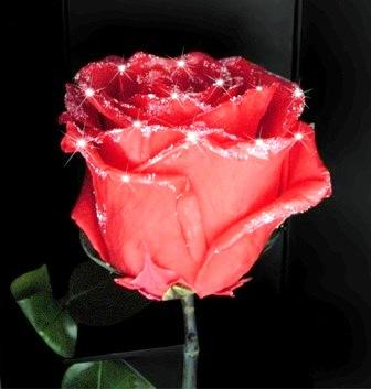 Genuine Natural Diamond Roses