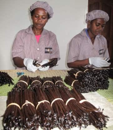 Our production center is standard vanilla food, our emplees are renowned specialists to sort the vanilla by quality and length.