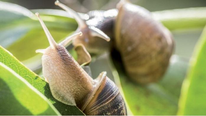 Production et élevage d'escargots