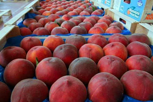 Fresh Peaches from Naoussa