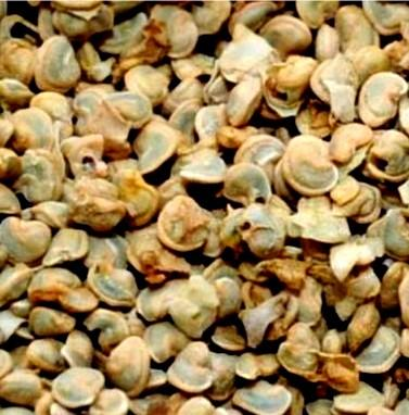"""Pépins de figue de barbarie """"Nopalisse Nature"""": Graines 100 % végétales, naturelles, pures, propres et intactes, issues de figuiers de barbarie cultivés suivant les modes bio."""