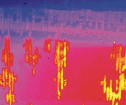 Wärmefluss-Thermographie