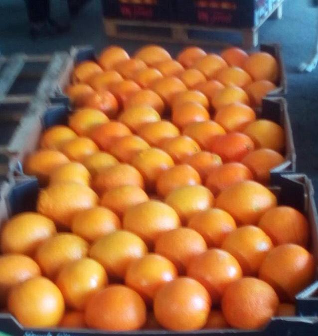 GREEK CITRUS NAVALINES, NAVELS, CLEMENTINES LEMONS ARE AVAILABLE IN ALL SIZES AND TYPE OF PACKING