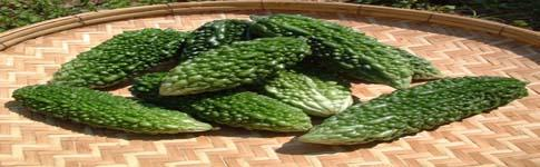 WE ARE EXPORTERS OF BITTER MELON FROM PAKISTAN