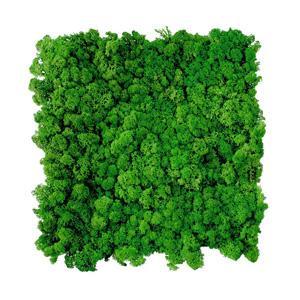 SM Panel (DIY) Moss-green-54