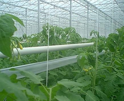 CO2 tubes for regulation of CO2 in the greenhouses. Can be produced in different diameters and lengths.