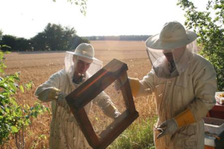 Honig von der Ostsee – Hanse Honig