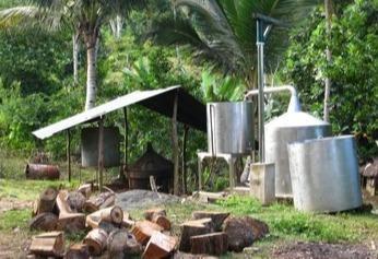 Production huiles végétales et huiles essentielles