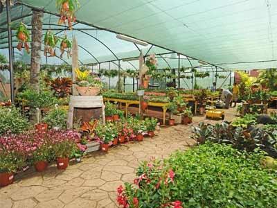 Jardinería, horticultura y floricultura: máquinas y suministros
