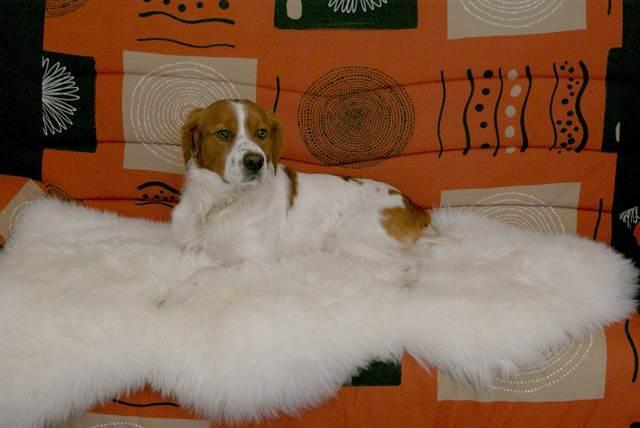 Peau de mouton mérinos australien.En  descente de lit ou en tapis vous apprécierez le moelleux et  la douceur de la laine mérinos. Existe en 2-4-6-8 peaux assemblées.