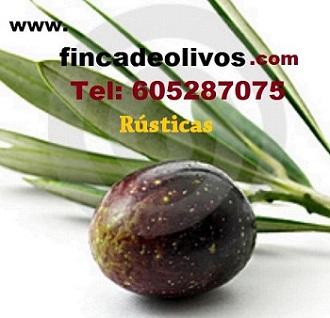 Fincas de olivos en venta
