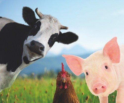 Tierernährung