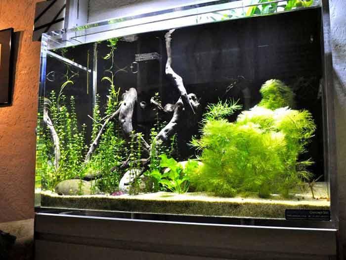 Aquarium Acrylique Plexiglas PMMA Plexiglass 2