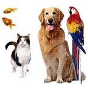 Зоотовары - продажа товаров и оборудования для домашних животных, птиц, рыб,и пр. Лучшие цены!