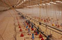 for cooling, desinfection, fire portection. High pressure fog and misting System for agricultural use. Low maintenance and easy to install.