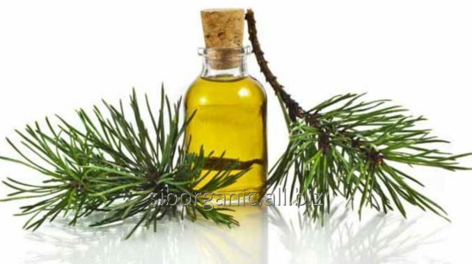 huile de sapin de sibérie (Abies sibirica)
