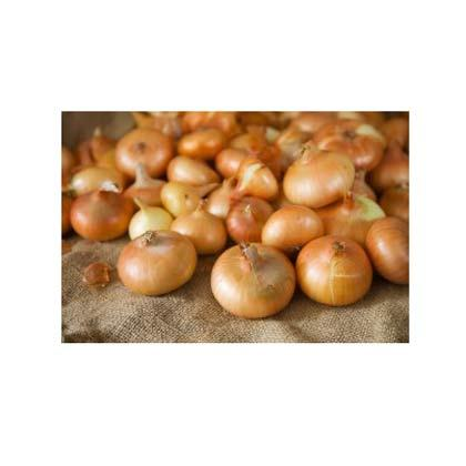 Cebollas. Florfruits