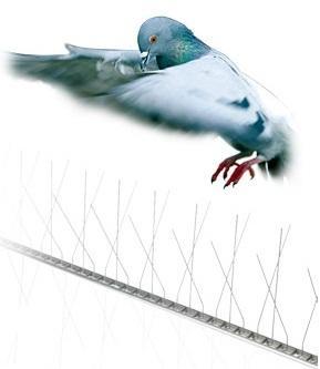 Dissuasori a fili metallici per piccioni e volatili