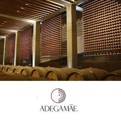 inside the cellar, view of oak barrels.