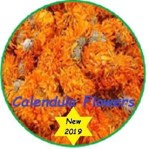 Calendula; (Calendula officinalis)