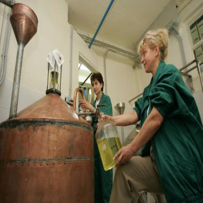 BIOLANDES production d'huiles essentielles et d'extraits naturels aromatiques