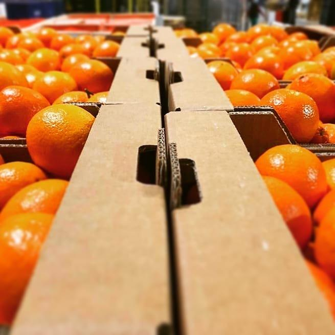 Juice-Oranges-Wholesale