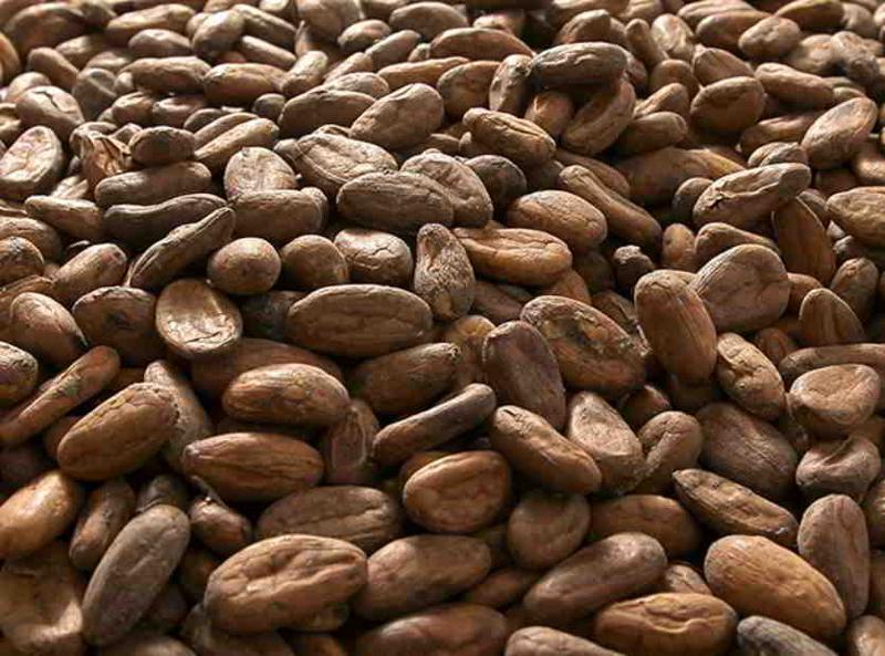 Extraits de cacao
