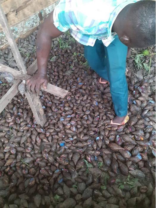 Eleveur d'escargots