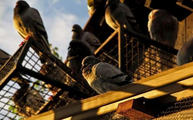 Control de palomas para edificios, comunidades de propietarios y chalets