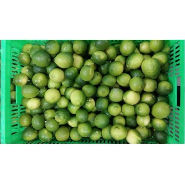 Import export citrons verts