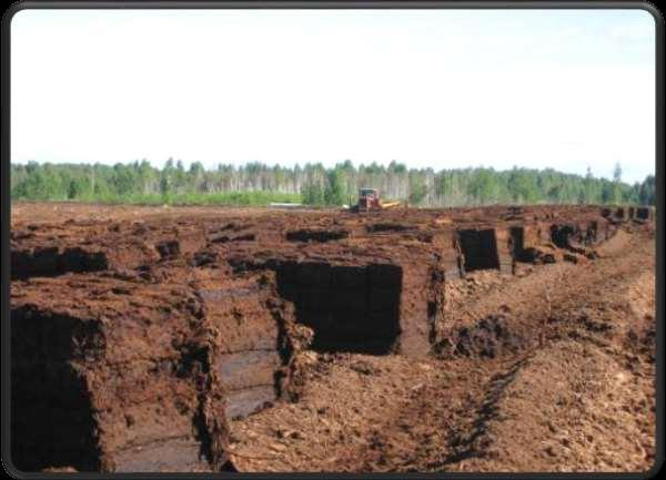 Peat is the overrotten pressed remains of plants and animals which include minerals.