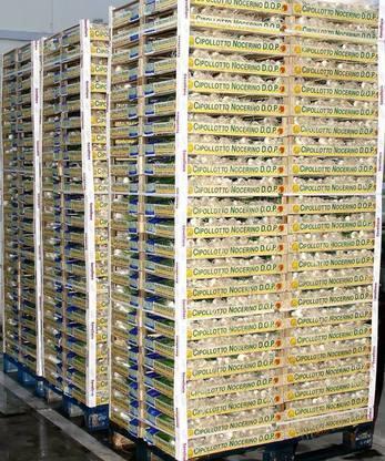 Confezioni di Cipollotti DOP pronte per la Grande Distribuzione