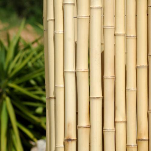 Clôture constituée de bambous entiers jointifs. Les bambous sont reliés par des fils invisibles qui passent à l'intérieur des tiges.