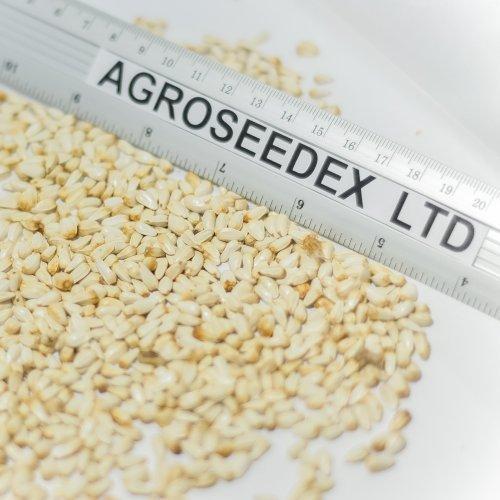 Компания предлагает сафлор высокого качества на экспорт.