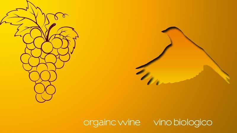 vendita online di vini biologici di alta qualità