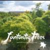 FANTASTIC TREES